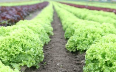 Vijf succesfactoren voor her-verbinden regionaal voedselsysteem